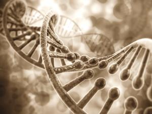 Разрушение ДНК клеток кожи
